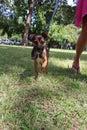 Dog Looking Toward The Camera