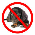 Dog looks on camera black lays and prohibiting sign isolated Stock Images