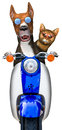 Dog Love Cat Motorcycle Isolated