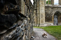 Dog lying at church ruine Royalty Free Stock Photo
