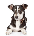 Dog lying in front.  on white background Royalty Free Stock Photo
