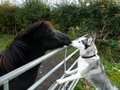 Dog meets the horse Stock Image
