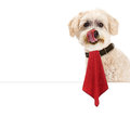 Dog messy face napkin and sign funny image of a cute with a licking his lips wearing a that is hanging over a blank white Stock Photo