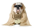 Dog monk Royalty Free Stock Photos