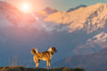 Dog in mountain alone Royalty Free Stock Photo