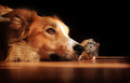 Dog and mouse friends Stock Photos