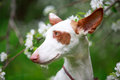 Dog on nature with apple tree blossoms Stock Photos