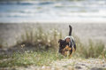 Dog near the sea Royalty Free Stock Photo