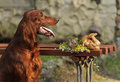 Dog near to trophies gun horizontal outdoors Royalty Free Stock Photo