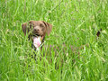 Dog nearly hidden in the open countryside Royalty Free Stock Photos