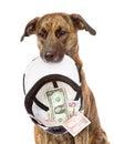 Dog needing the help isolated on white background Stock Photos