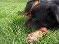Dog Nestled in Grass