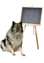 Dog obedience school board school a in front of a blackboard at Royalty Free Stock Photos