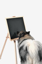 Dog obedience school board school a is standing in front of a blackboard at Royalty Free Stock Image