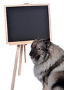 Dog obedience school board school a is standing in front of a blackboard at Stock Photos