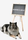 Dog obedience school board school a is standing in front of a blackboard at Royalty Free Stock Photos