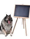 Dog obedience school board school a tired in front of a blackboard at Stock Image