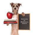 Dog obedience school teacher funny image of holding books on animal training an apple for and sign saying welcome to Royalty Free Stock Image