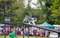 Dog obedience show Royalty Free Stock Photography