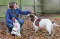 Dog owner with dogs female playing training two happy english springer spaniel as they meet for the first time at a rescue centre Royalty Free Stock Photos