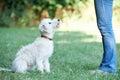 Dog Owner Teaching Pet Lurcher To Sit