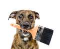 Dog with paint brush. isolated on white background Royalty Free Stock Photo