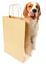 Dog with paper bag Royalty Free Stock Photo