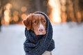 Dog in a park on the nature, winter Royalty Free Stock Photo