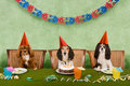 Dog party Royalty Free Stock Image