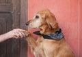 Dog paw Royalty Free Stock Photo