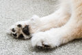 Dog paws Royalty Free Stock Photo