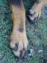 Dog Paws on Grass
