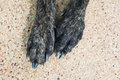 Dog paws pair of on the sand wash floor Royalty Free Stock Images