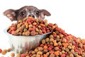 Dog peaking over dog food Royalty Free Stock Photo
