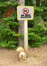 Dog pee on no dogs allowed sign. Royalty Free Stock Photos