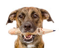 Dog With A Pencil. Isolated On...