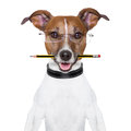 Dog pencil mouth glasses Royalty Free Stock Photos