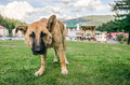 Dog perspective of a dog friend Royalty Free Stock Photo
