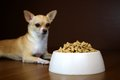 Dog Perspective of a Food Bowl Royalty Free Stock Photo