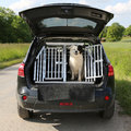 Dog pet in a car wants to travel sitting trunk and Royalty Free Stock Image