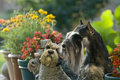 Dog pet Mini Schnauzer garden Stock Photo