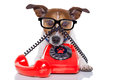 Dog on the phone Royalty Free Stock Photo