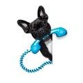 Dog phone telephone Royalty Free Stock Photo