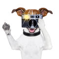 Dog photo Stock Images