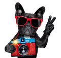 Dog photographer cool tourist taking a snapshot or picture with a retro old camera Royalty Free Stock Photos