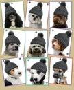 Dog photos on pin board Royalty Free Stock Photo
