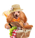 Dog with picnic basket isolated on white Royalty Free Stock Photos