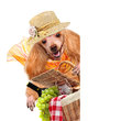 Dog with picnic basket the white banners Stock Image