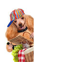 Dog with picnic basket the white banners Stock Photo