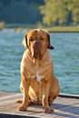 Dog on a pier Royalty Free Stock Photo